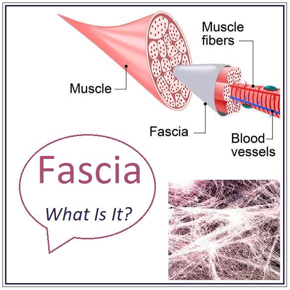 Fascia – What Is It?